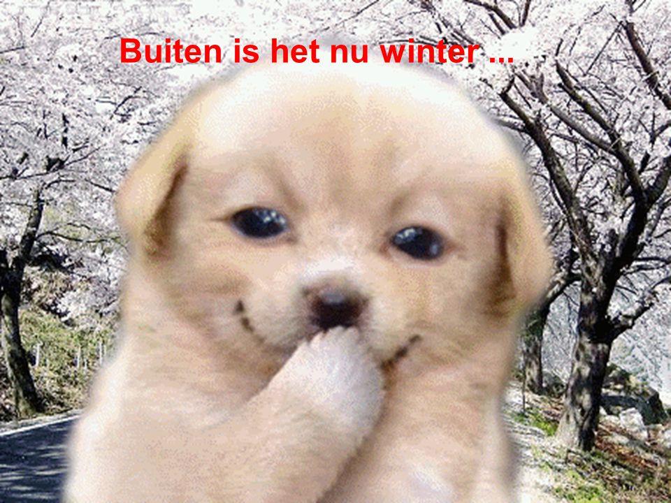 Buiten is het nu winter...