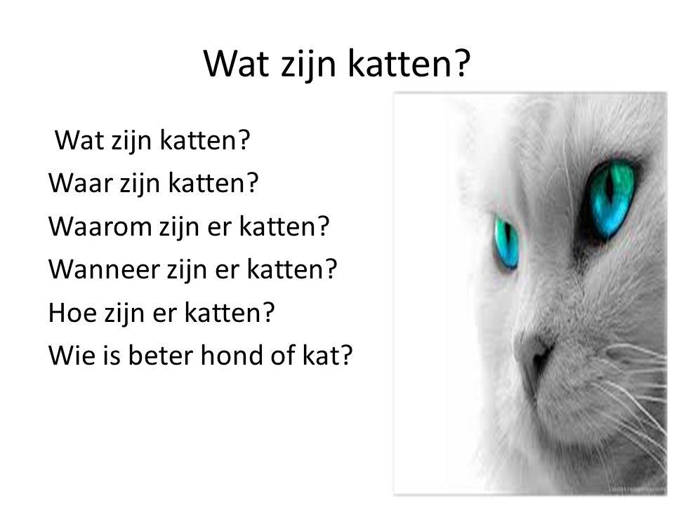 Wat zijn katten? Waar zijn katten? Waarom zijn er katten? Wanneer zijn er katten? Hoe zijn er katten? Wie is beter hond of kat?