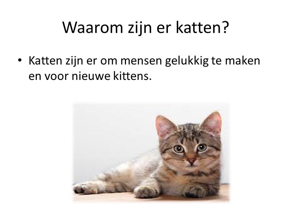 Waarom zijn er katten? Katten zijn er om mensen gelukkig te maken en voor nieuwe kittens.