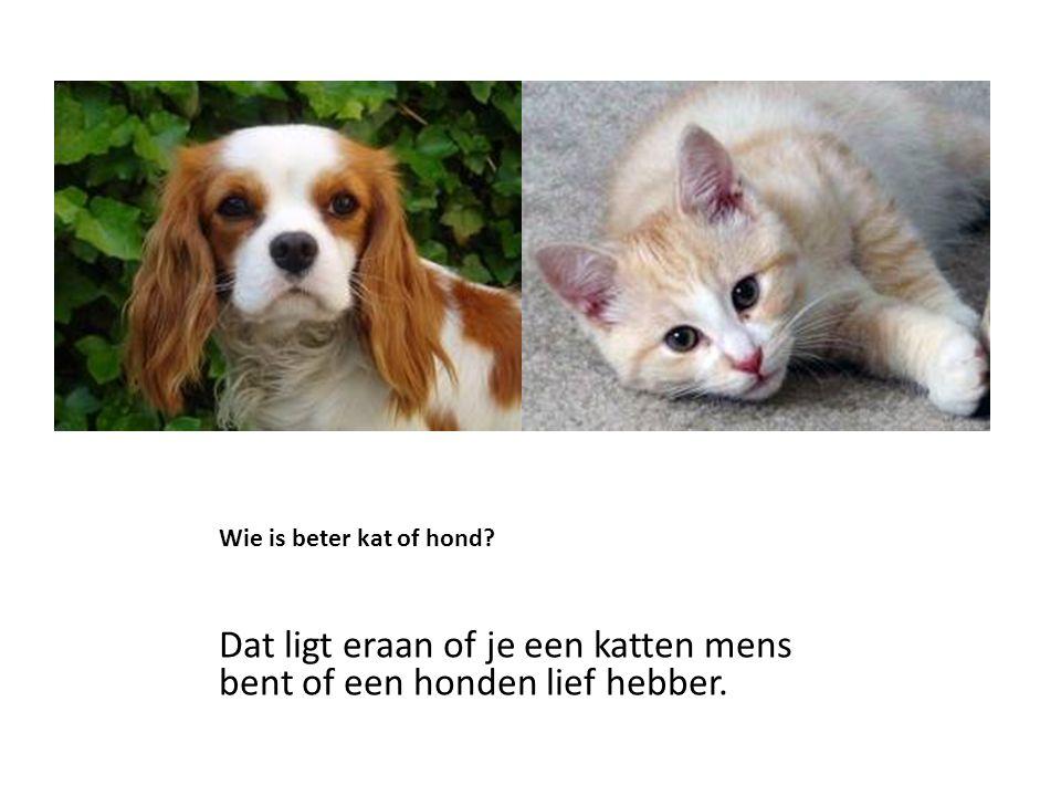 Wie is beter kat of hond? Dat ligt eraan of je een katten mens bent of een honden lief hebber.