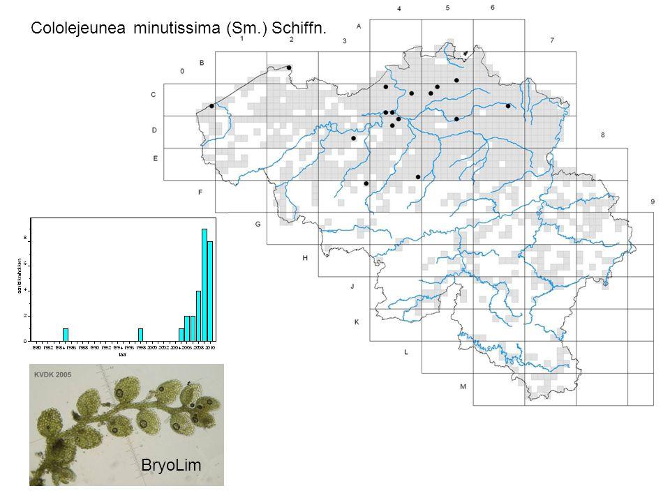 Cololejeunea minutissima (Sm.) Schiffn. BryoLim