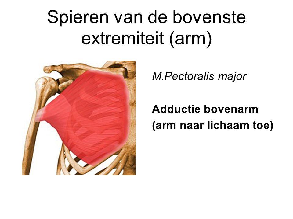 Spieren van de bovenste extremiteit (arm) M.Pectoralis major Adductie bovenarm (arm naar lichaam toe)