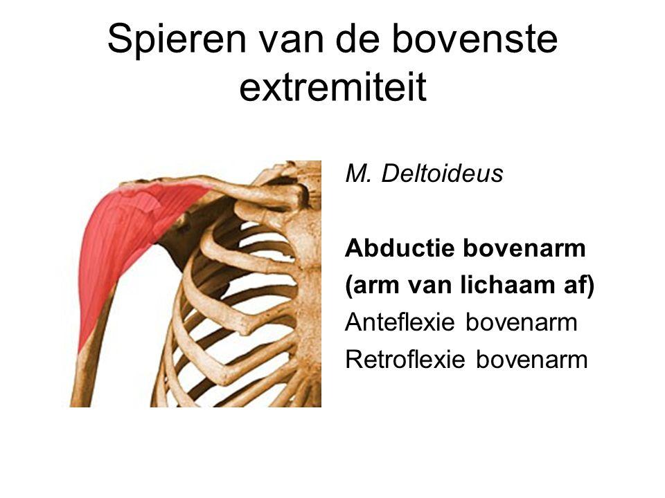 Spieren van de bovenste extremiteit M. Deltoideus Abductie bovenarm (arm van lichaam af) Anteflexie bovenarm Retroflexie bovenarm