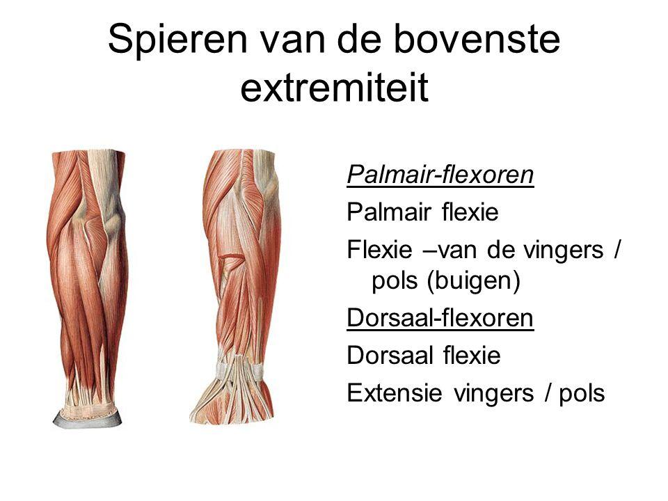 Spieren van de bovenste extremiteit Palmair-flexoren Palmair flexie Flexie –van de vingers / pols (buigen) Dorsaal-flexoren Dorsaal flexie Extensie vi