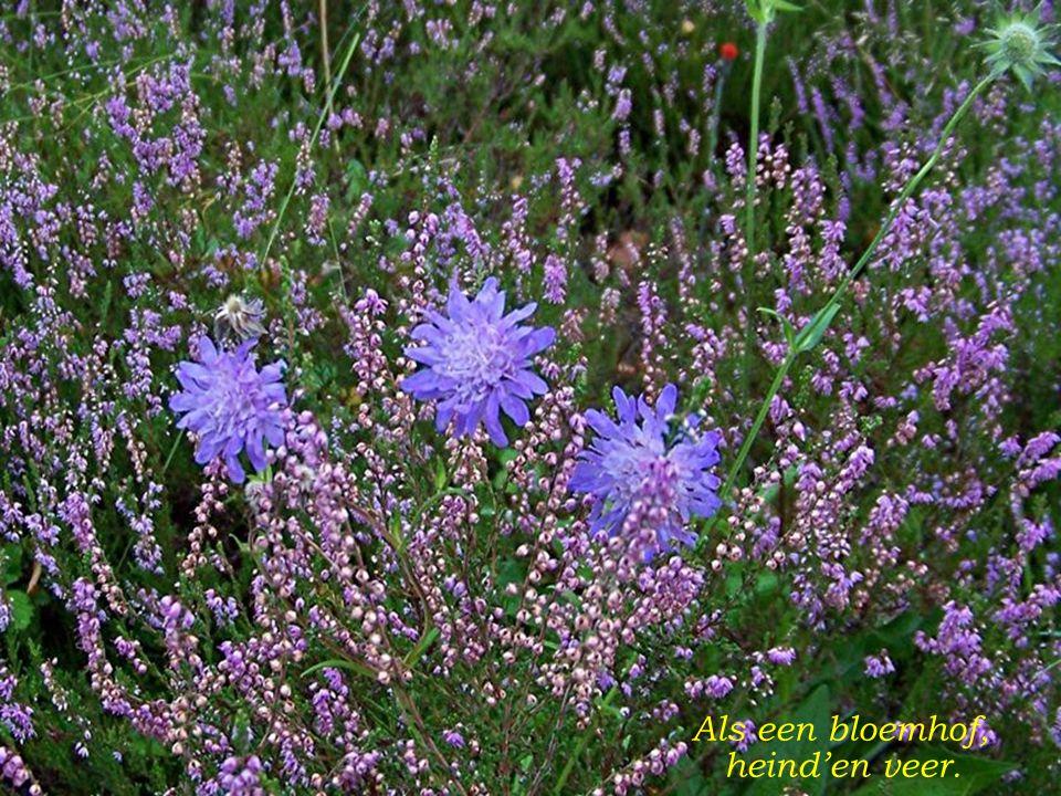 Bloeien bloempjes lief en teer, Pralend in de zonnestralen