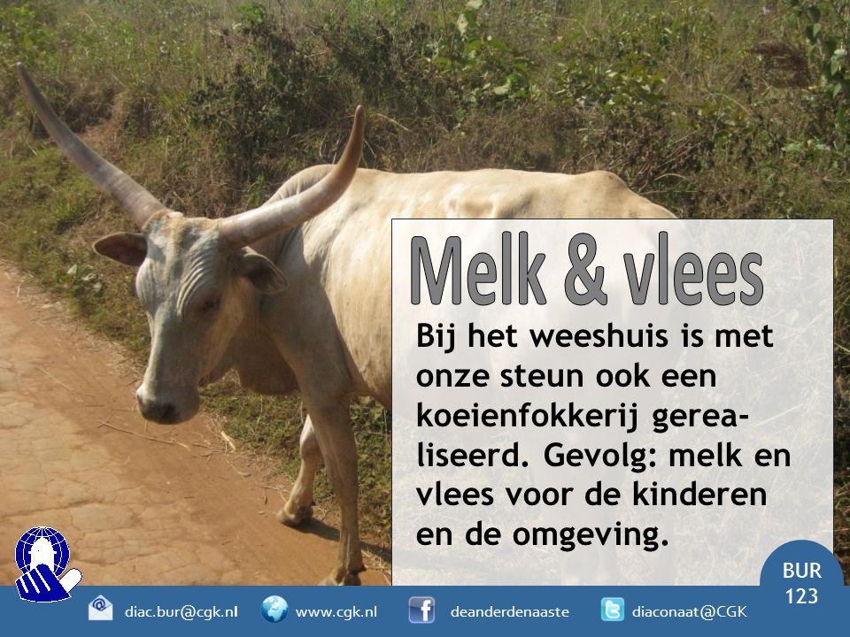 Bij het weeshuis is met onze steun ook een koeienfokkerij gerea- liseerd.