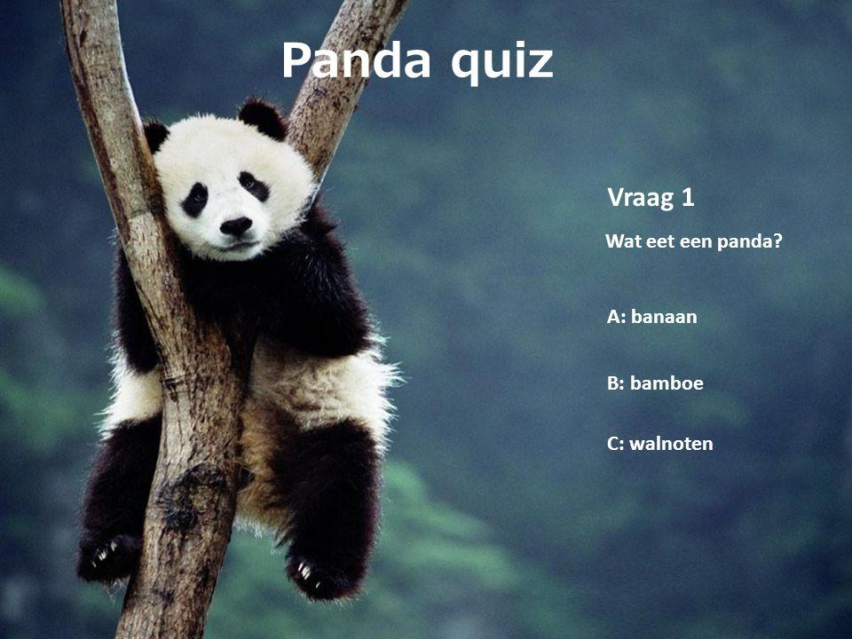 Panda quiz Vraag 1 Wat eet een panda? A: banaan B: bamboe C: walnoten
