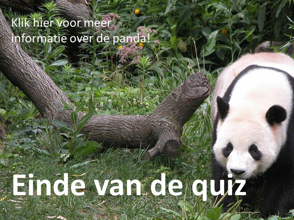 Copyright by Lisanne van Oeveren Einde van de quiz Klik hier voor meer informatie over de panda!