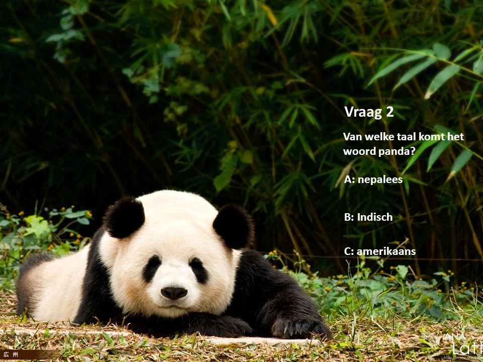 Copyright by Lisanne van Oeveren Vraag 2 Van welke taal komt het woord panda? A: nepalees B: Indisch C: amerikaans
