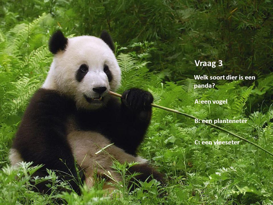 Copyright by Lisanne van Oeveren Vraag 3 Welk soort dier is een panda? A:een vogel B: een planteneter C: een vleeseter
