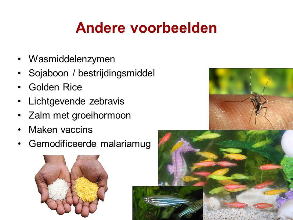 Andere voorbeelden Wasmiddelenzymen Sojaboon / bestrijdingsmiddel Golden Rice Lichtgevende zebravis Zalm met groeihormoon Maken vaccins Gemodificeerde malariamug