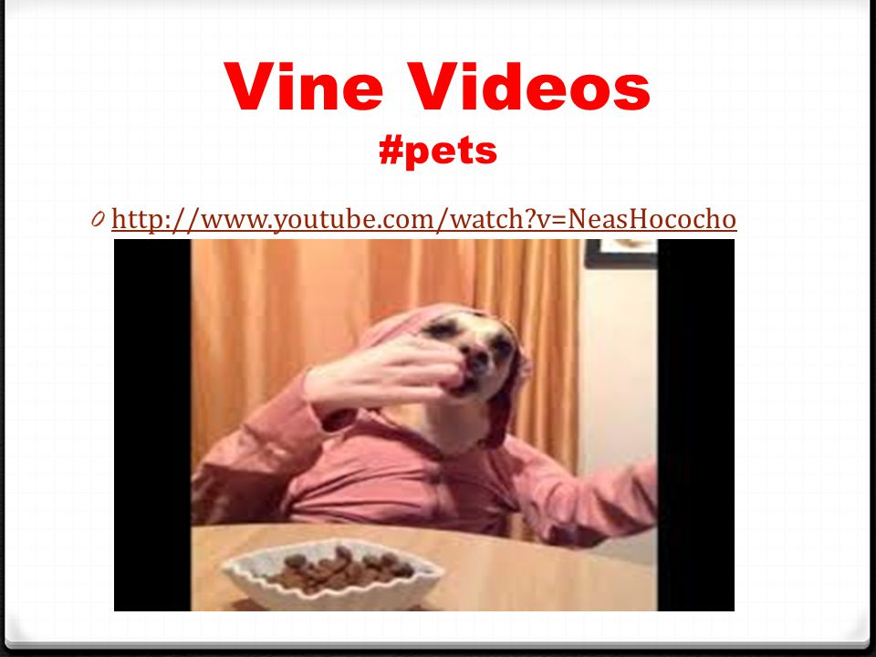 Vine Videos #pets 0 http://www.youtube.com/watch v=NeasHococho http://www.youtube.com/watch v=NeasHococho