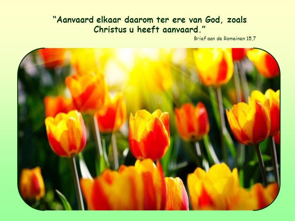 Aanvaard elkaar daarom ter ere van God, zoals Christus u heeft aanvaard. Brief aan de Romeinen 15,7