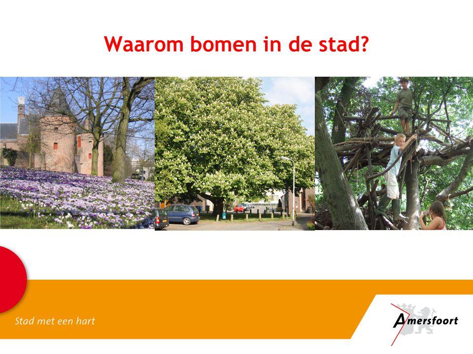 Huidige uitgangspunten Veiligheid: voldoen aan wettelijke zorgplicht Duurzaamheid: bomen voor de toekomst Leefbaarheid: behouden van groene leefomgeving