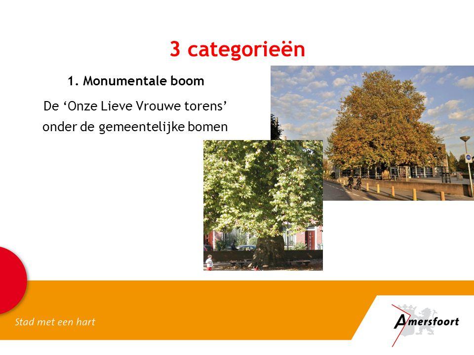 1. Monumentale boom De 'Onze Lieve Vrouwe torens' onder de gemeentelijke bomen 3 categorieën