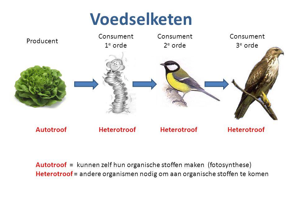 Voedselketen Producent Consument 1 e orde Consument 2 e orde Consument 3 e orde Autotroof = kunnen zelf hun organische stoffen maken (fotosynthese) He