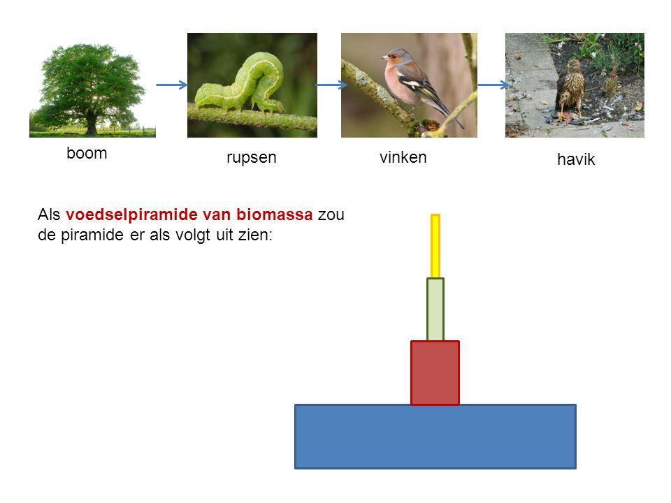 havik vinkenrupsen boom Als voedselpiramide van biomassa zou de piramide er als volgt uit zien: