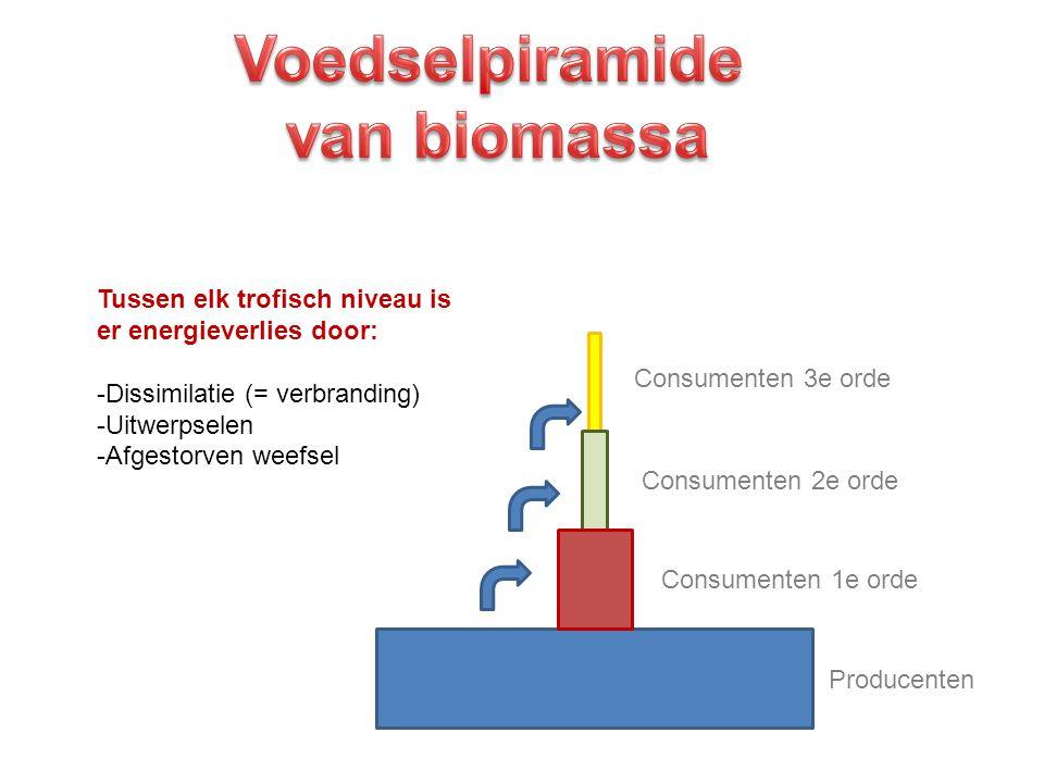 Tussen elk trofisch niveau is er energieverlies door: -D-Dissimilatie (= verbranding) -U-Uitwerpselen -A-Afgestorven weefsel Producenten Consumenten 3
