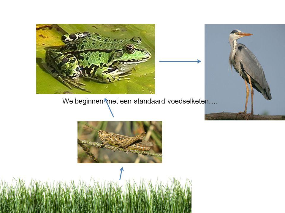 We beginnen met een standaard voedselketen….