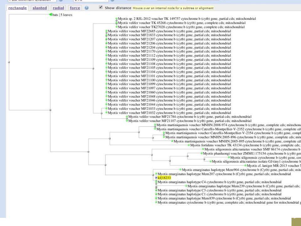 DNA barcoding test Bv. Vleermuiskeutel uit Eijsden (Daan Dekeukeleire)