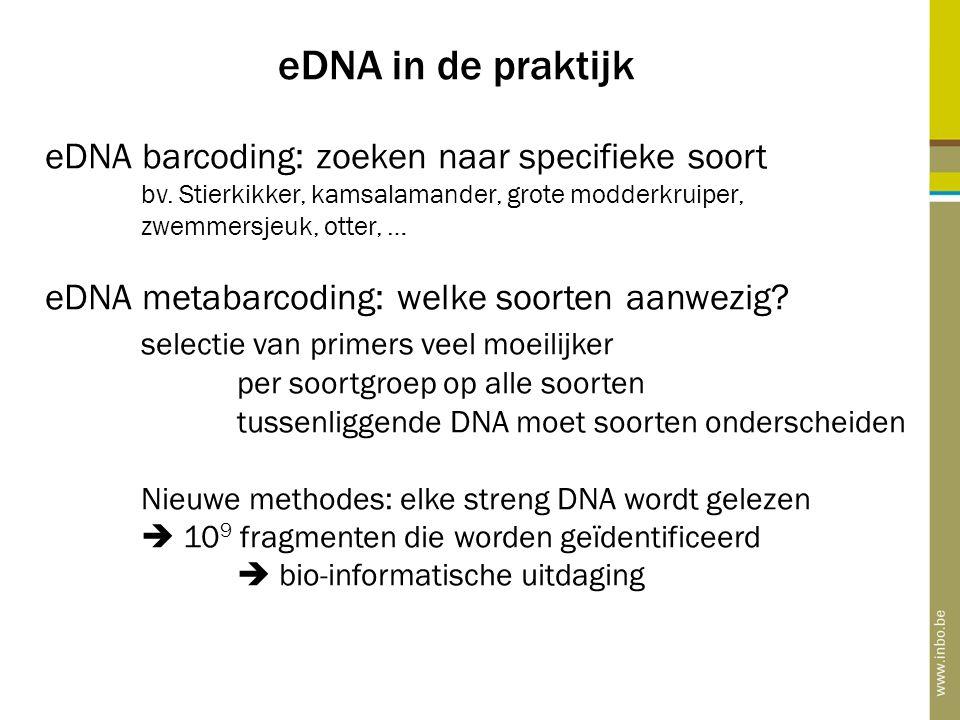 eDNA in de praktijk eDNA barcoding: zoeken naar specifieke soort bv. Stierkikker, kamsalamander, grote modderkruiper, zwemmersjeuk, otter, … eDNA meta