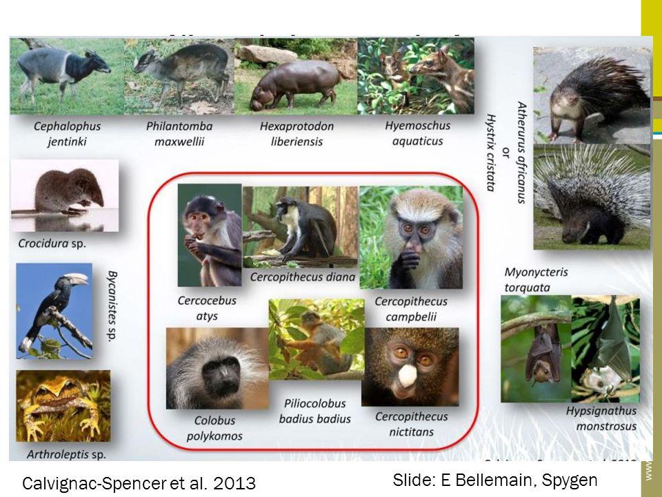 Niet enkel waterstalen! Calvignac-Spencer et al. 2013 Slide: E Bellemain, Spygen
