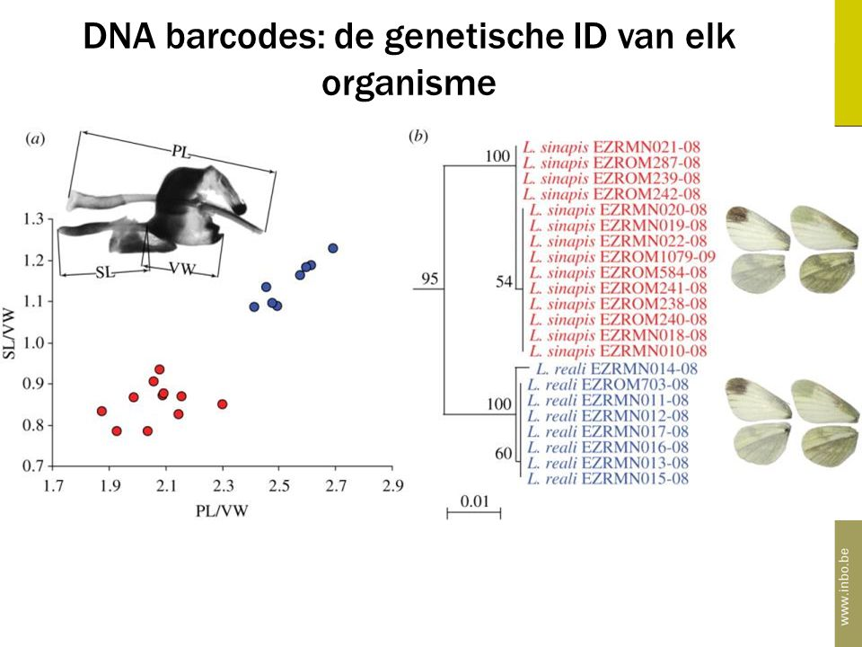 DNA barcodes: de genetische ID van elk organisme DNA barcodes: de genetische vingerafdruk van elk organisme alfabet met slechts vier letters: A, C, T,