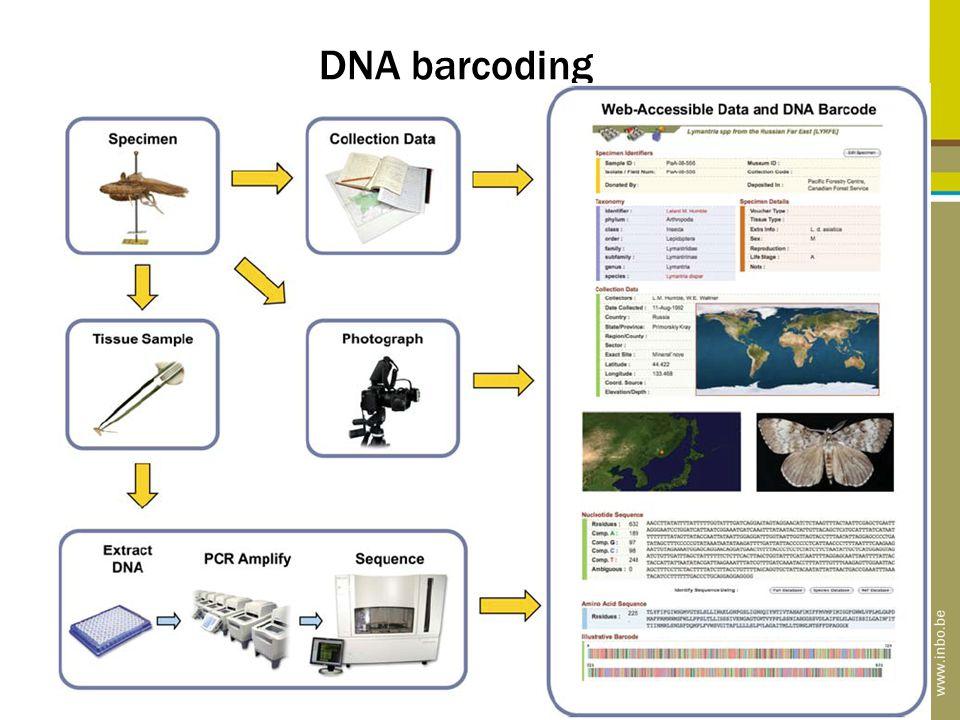 DNA barcoding test Bv. welke haaien in haaienvinnensoep?