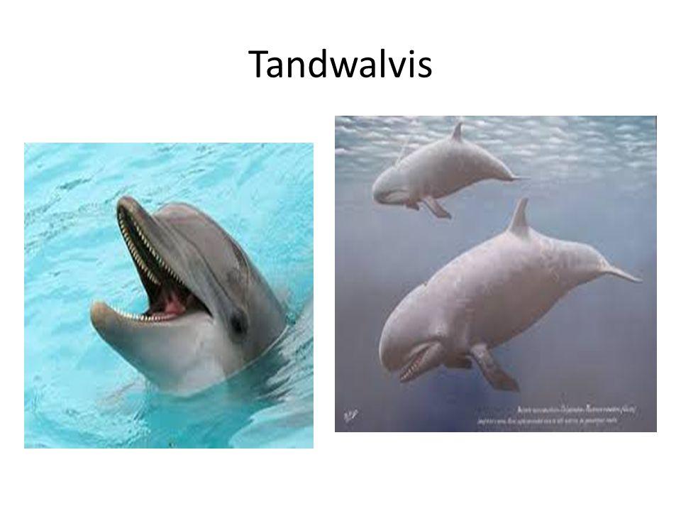 Hoe ziet een dolfijn eruit Van buiten en binnen Buitenkant
