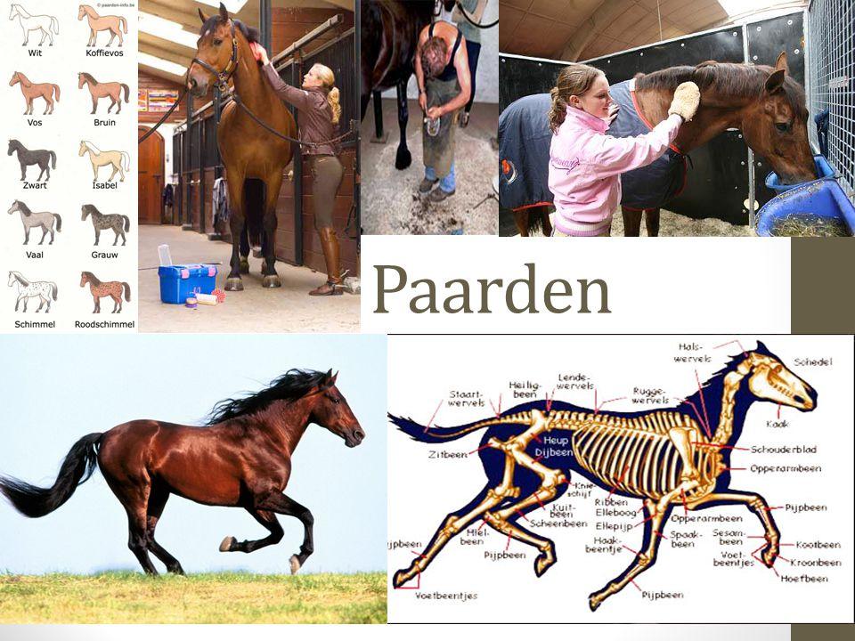 Inhoud Paarden in het nieuws Test je kennis Gedrag paard Hoefverzorging paard