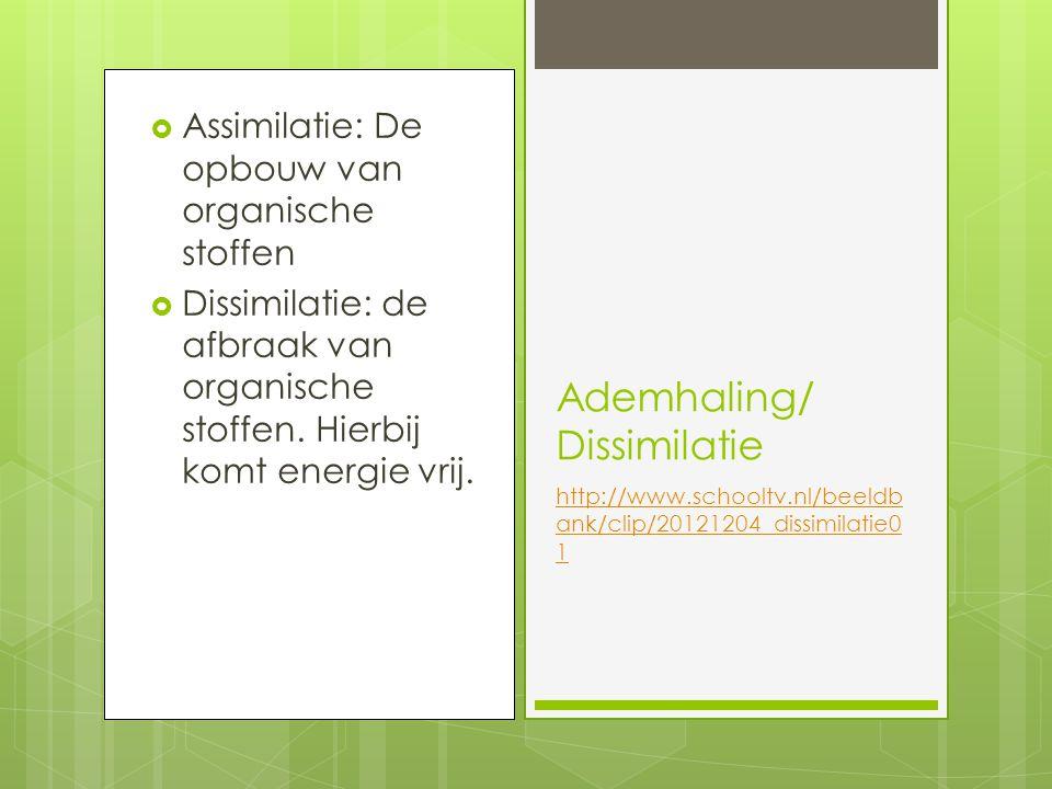Ademhaling/ Dissimilatie http://www.schooltv.nl/beeldb ank/clip/20121204_dissimilatie0 1  Assimilatie: De opbouw van organische stoffen  Dissimilatie: de afbraak van organische stoffen.