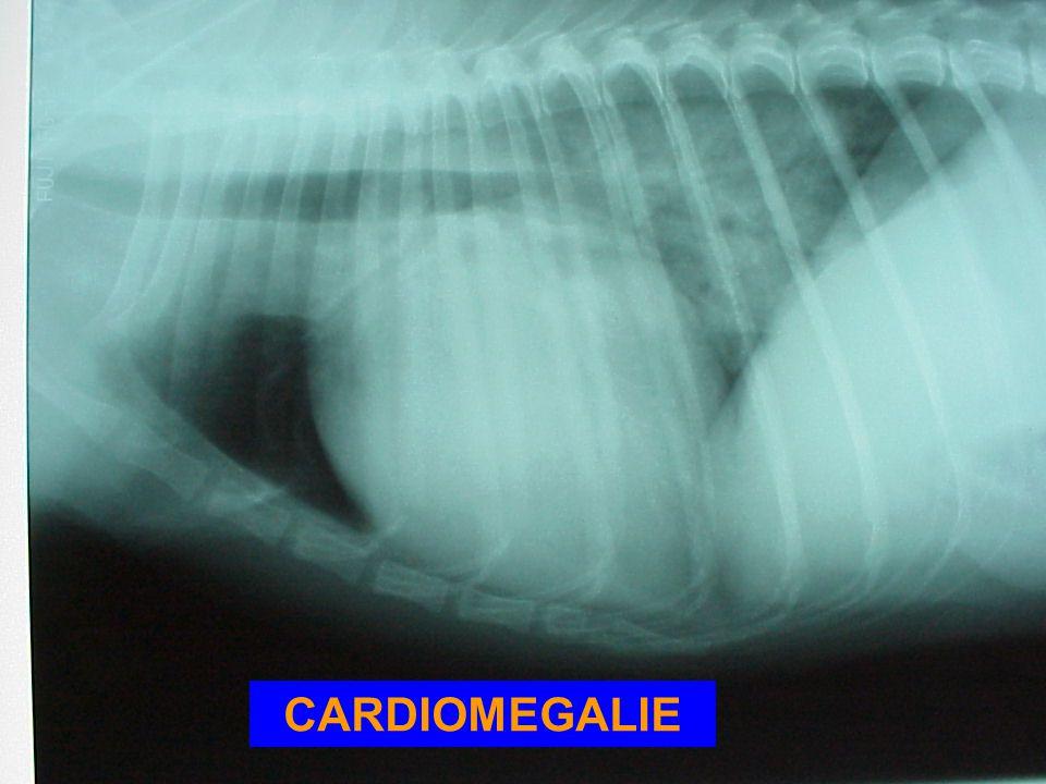 T4 B L L B TRACHEA NORMAAL: L+B < OF = 10,5 vertebrae