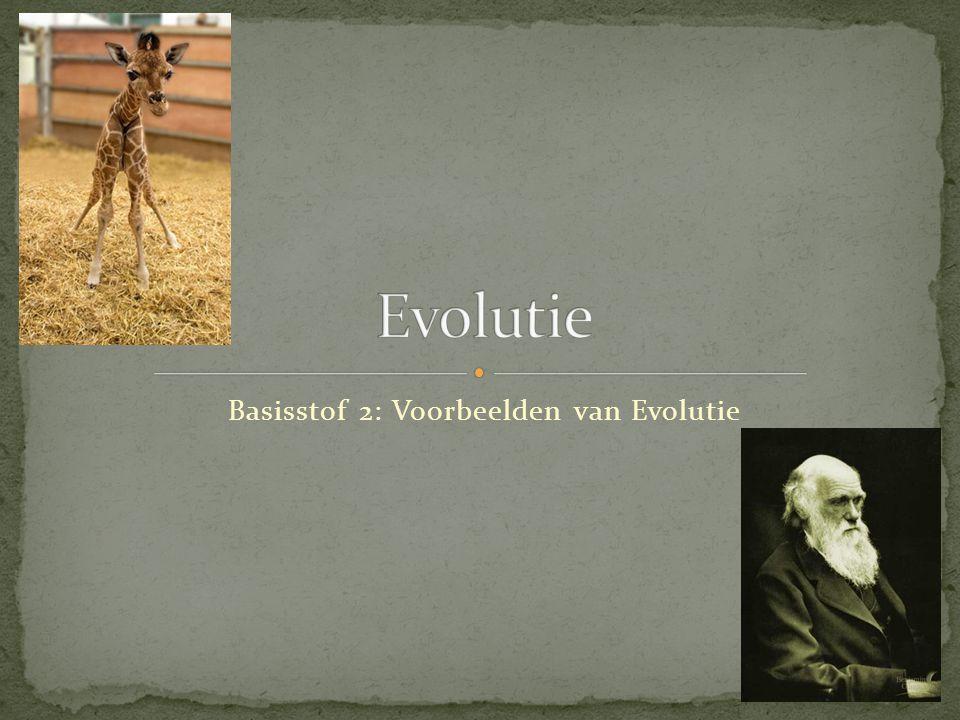 Vóór de industriële revolutie Dat er mutanten voorkomen binnen een soort is belangrijk voor de overleving van de soort.
