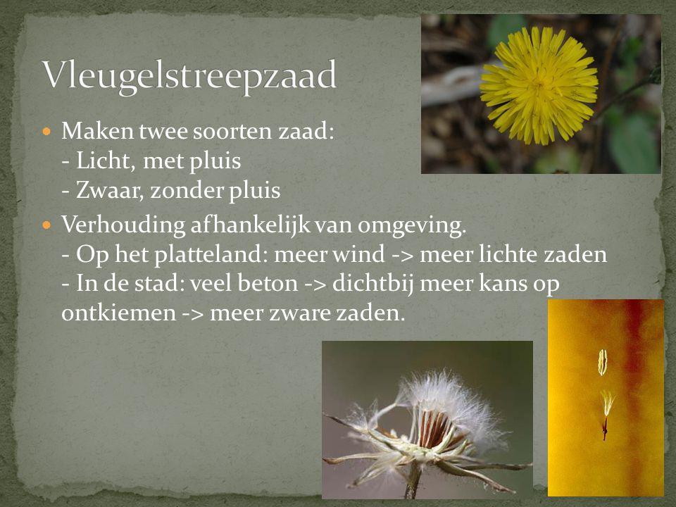 Maken twee soorten zaad: - Licht, met pluis - Zwaar, zonder pluis Verhouding afhankelijk van omgeving. - Op het platteland: meer wind -> meer lichte z