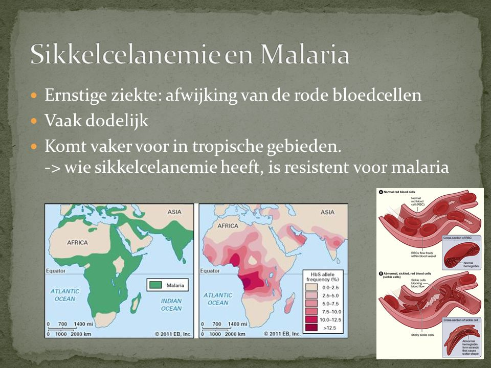Ernstige ziekte: afwijking van de rode bloedcellen Vaak dodelijk Komt vaker voor in tropische gebieden. -> wie sikkelcelanemie heeft, is resistent voo