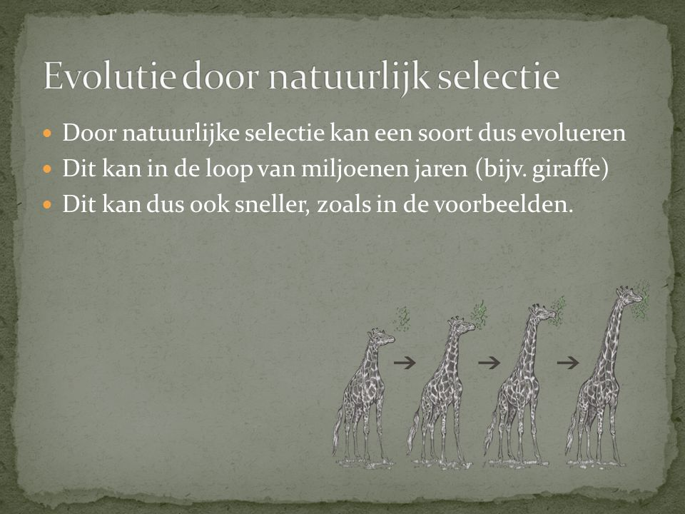 Door natuurlijke selectie kan een soort dus evolueren Dit kan in de loop van miljoenen jaren (bijv. giraffe) Dit kan dus ook sneller, zoals in de voor