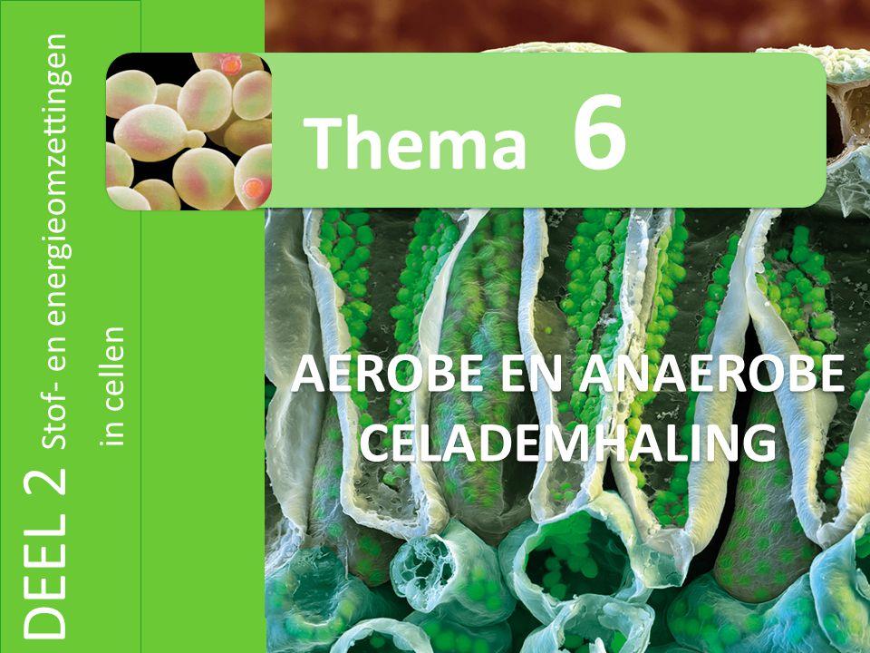 DEEL 2 Stof- en energieomzettingen in cellen AEROBE EN ANAEROBE CELADEMHALING Thema 6