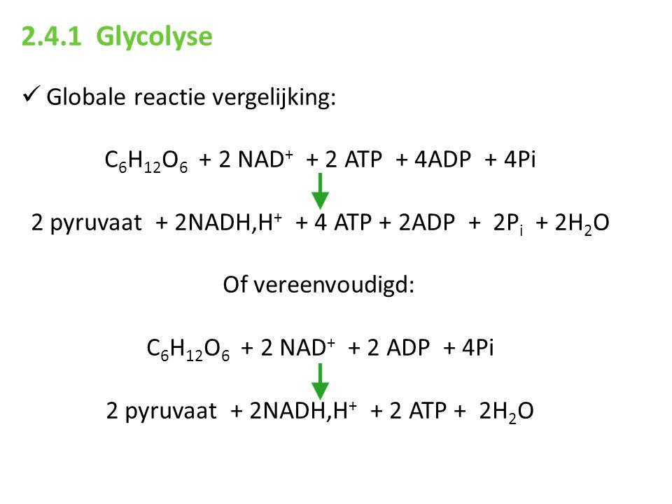 2.4.1 Glycolyse Globale reactie vergelijking: C 6 H 12 O 6 + 2 NAD + + 2 ATP + 4ADP + 4Pi 2 pyruvaat + 2NADH,H + + 4 ATP + 2ADP + 2P i + 2H 2 O Of ver