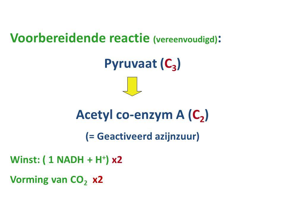 Voorbereidende reactie (vereenvoudigd) : Pyruvaat (C 3 ) Acetyl co-enzym A (C 2 ) (= Geactiveerd azijnzuur) Winst: ( 1 NADH + H + ) x2 Vorming van CO