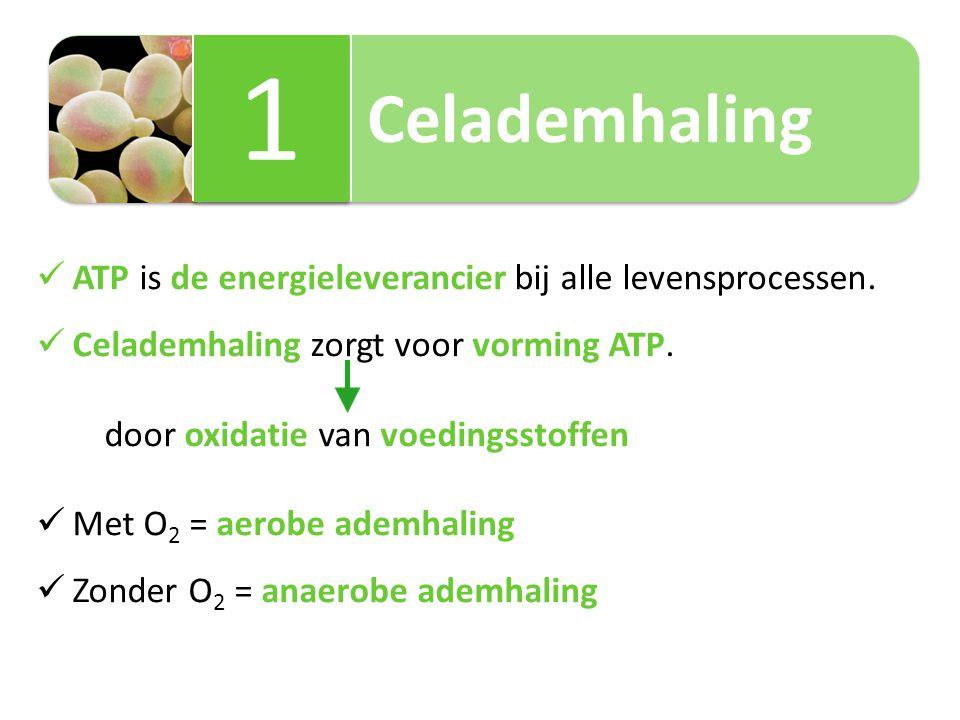 Celademhaling 1 1 ATP is de energieleverancier bij alle levensprocessen. Celademhaling zorgt voor vorming ATP. door oxidatie van voedingsstoffen Met O