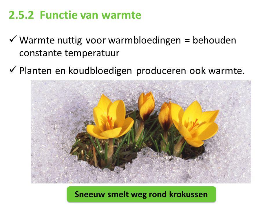 2.5.2 Functie van warmte Warmte nuttig voor warmbloedingen = behouden constante temperatuur Planten en koudbloedigen produceren ook warmte. Sneeuw sme