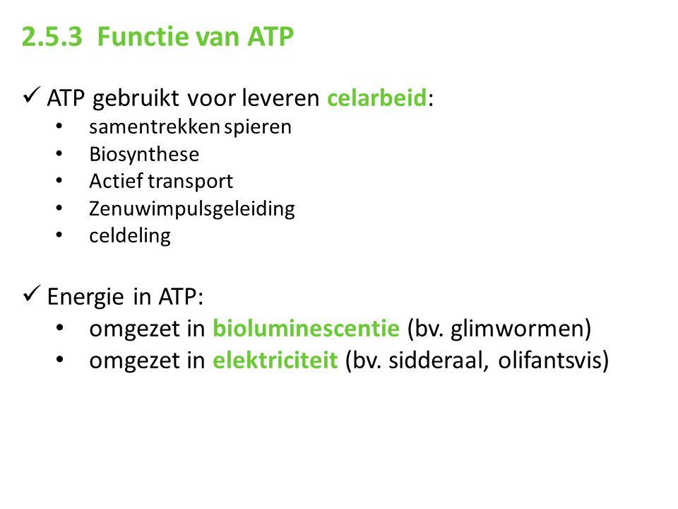 2.5.3 Functie van ATP ATP gebruikt voor leveren celarbeid: samentrekken spieren Biosynthese Actief transport Zenuwimpulsgeleiding celdeling Energie in
