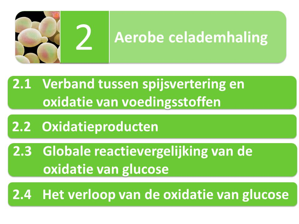 Aerobe celademhaling 2 2 2.1Verband tussen spijsvertering en oxidatie van voedingsstoffen 2.1Verband tussen spijsvertering en oxidatie van voedingssto