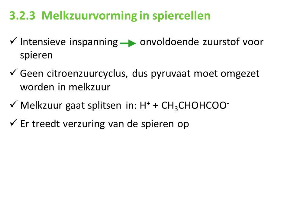 3.2.3 Melkzuurvorming in spiercellen Intensieve inspanning onvoldoende zuurstof voor spieren Geen citroenzuurcyclus, dus pyruvaat moet omgezet worden