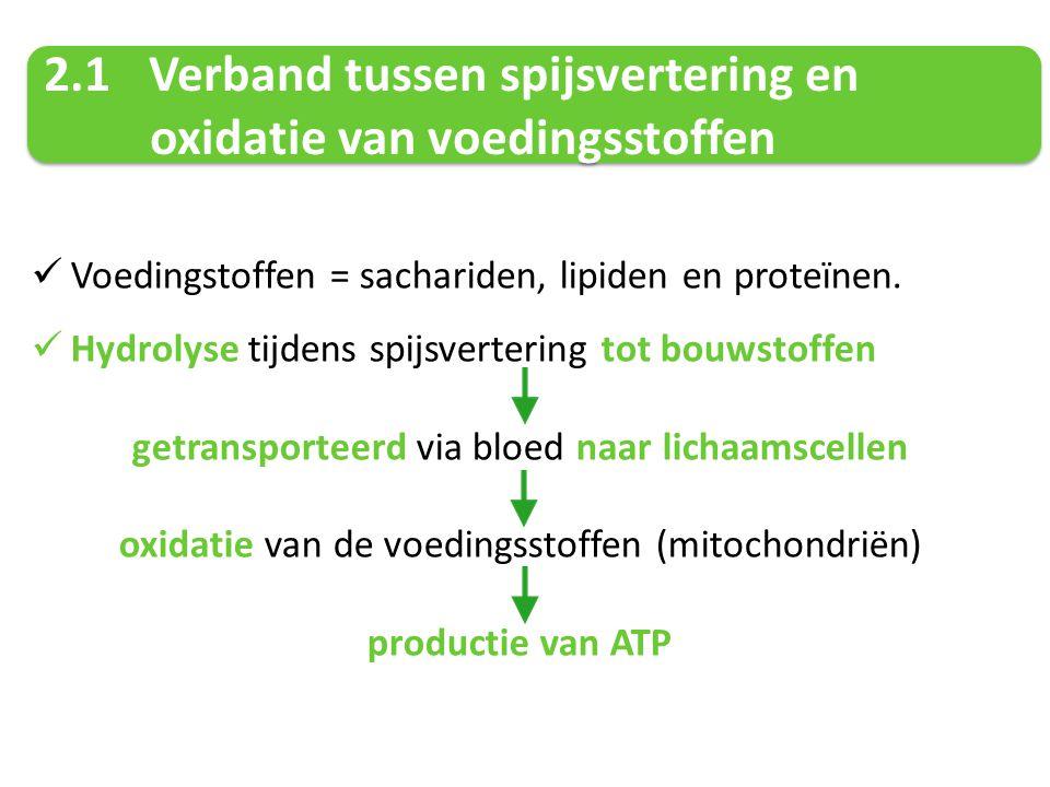 Ademhaling is een chemisch proces vetten suikers amino- zuren H2OH2O CO 2 ATP Oxidatie (verbranding) stapsgewijs enzymen