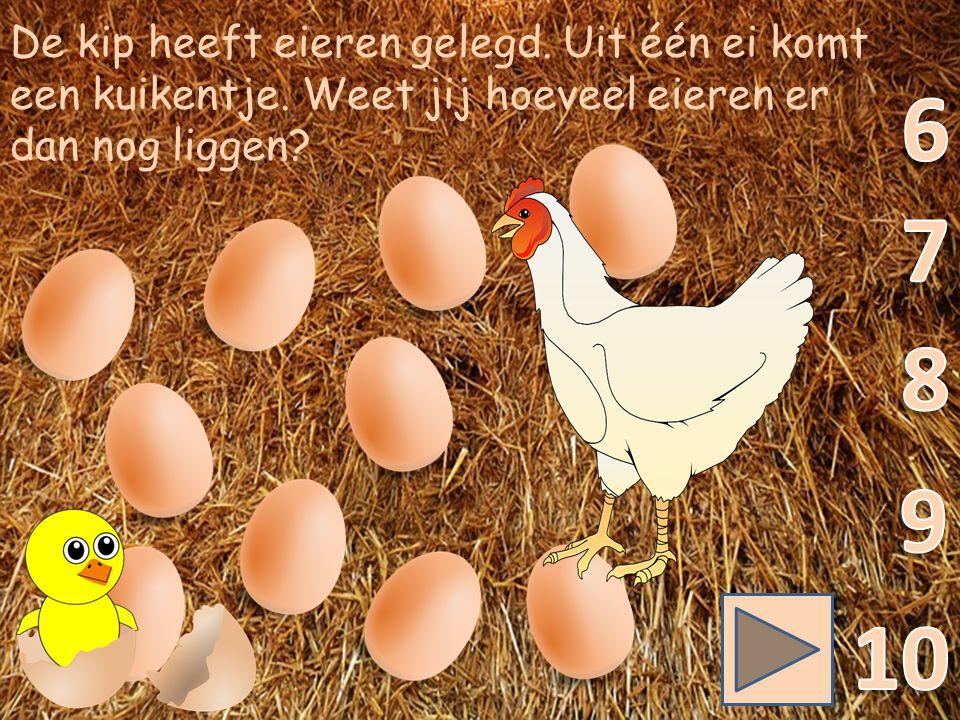 De kip heeft eieren gelegd. Uit één ei komt een kuikentje.