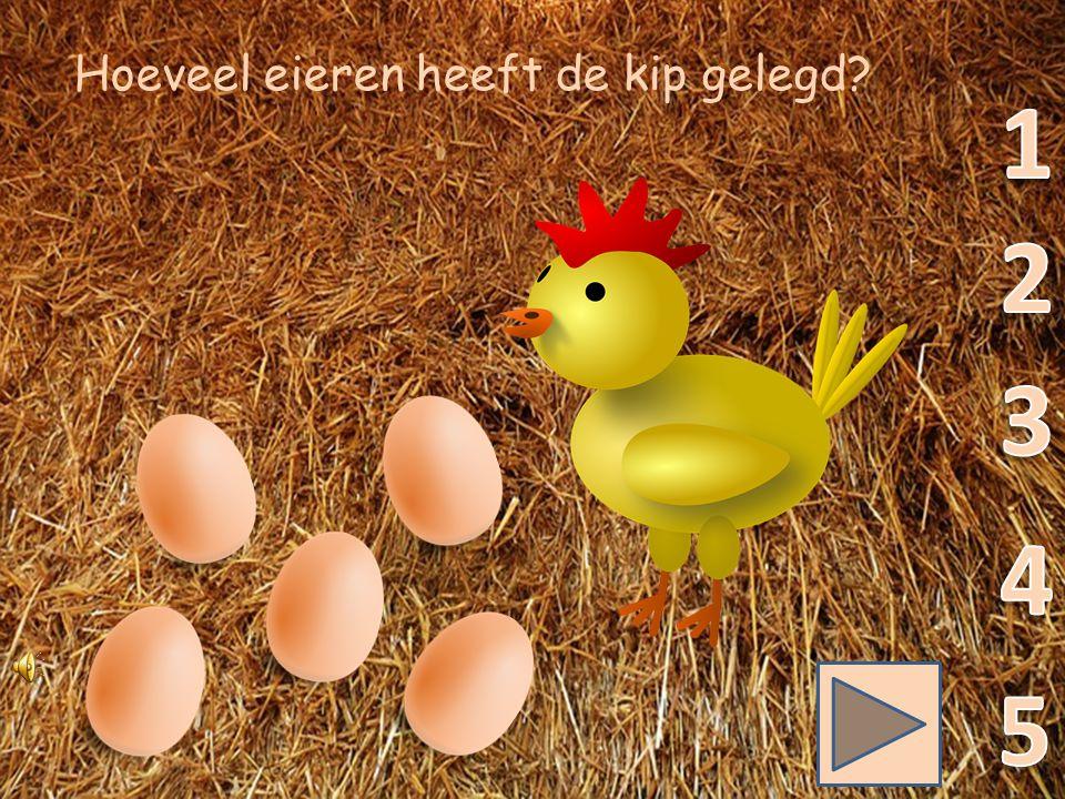 Kippen, kuikens en eieren.