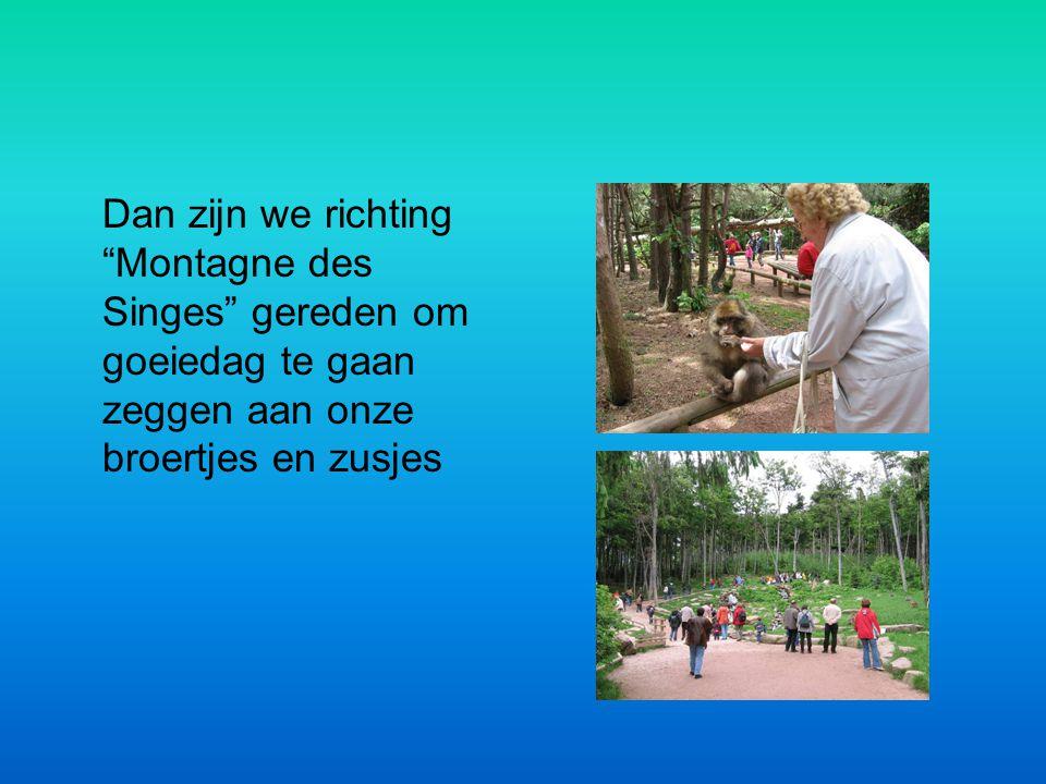 Dan zijn we richting Montagne des Singes gereden om goeiedag te gaan zeggen aan onze broertjes en zusjes