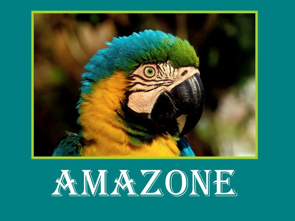 Een Powerpoint Presentatie geinspireerd door de grootste natuurlijke habitat ter wereld