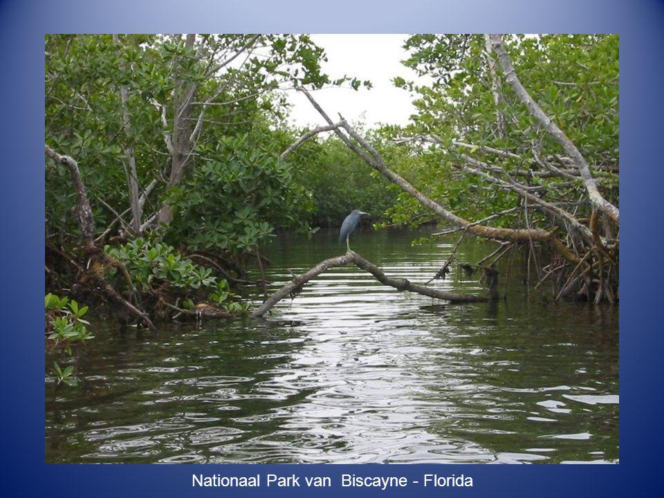 Blue River Park - Nieuw Caledonië
